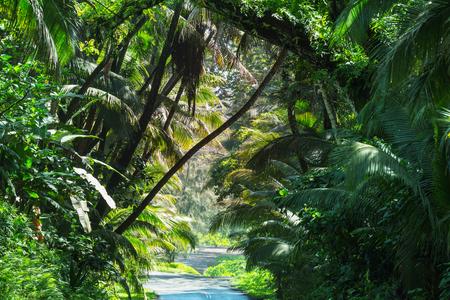 Chemin de terre dans la jungle à distance à Big Island, Hawaii Banque d'images