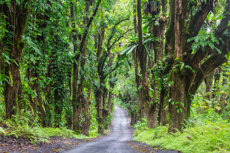 Dirt road in remote jungle in Big Island, Hawaii Banque d'images