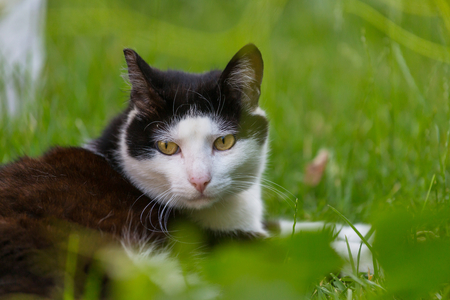 Cat in the green grass Stock Photo