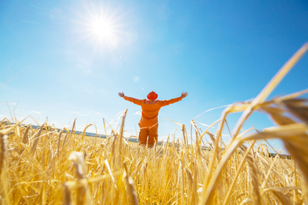 Happy man in yellow wheat field