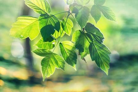 Grüne Blätter schließen oben im Garten Standard-Bild