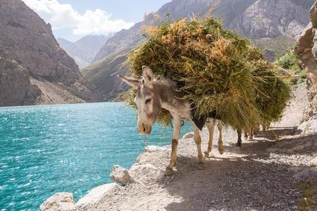 Alone donkey in Fann mountain, Tajikistan