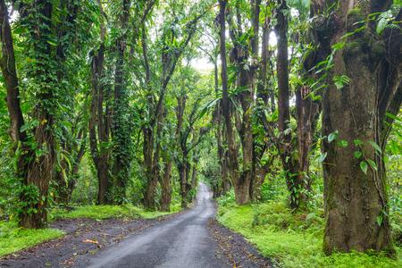 Chemin de terre dans la jungle éloignée de Big Island, Hawaii