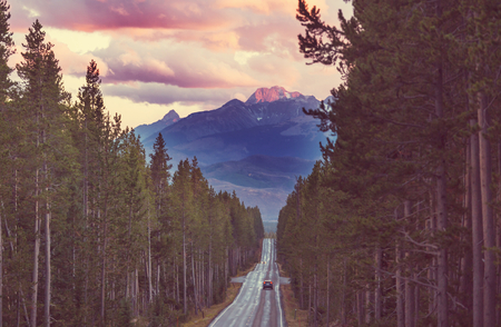 Highway in the forest, USA, Wyoming.