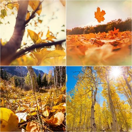 Orange and Yellow Autumn collage 免版税图像