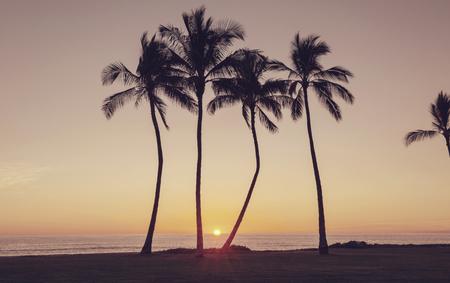 Beautiful scene in Hawaiian sunset