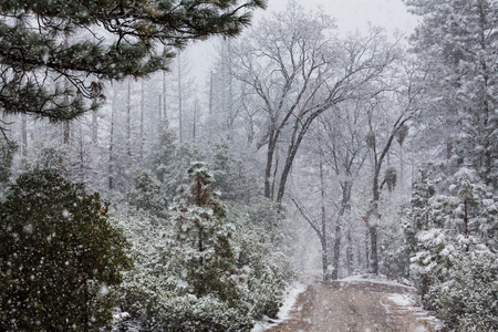 Snow covered trees in the winter forest
