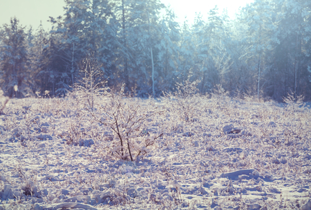 Frozen late autumn meadow close up. Stock Photo