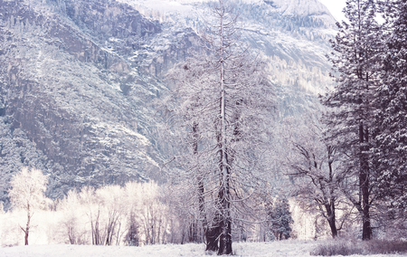 Scenic snow-covered forest in winter season. Stock Photo