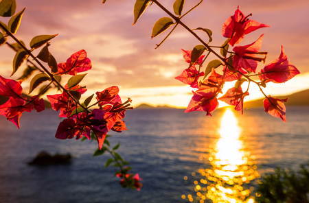 Fantastic tropical sunset in flowers garden Stock Photo