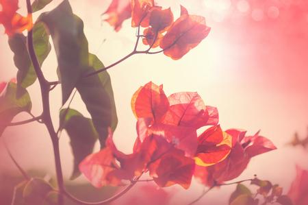 Exotic flowers in Tropical garden Banco de Imagens