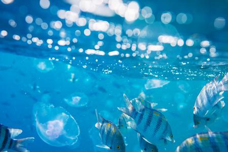 fish under water Imagens