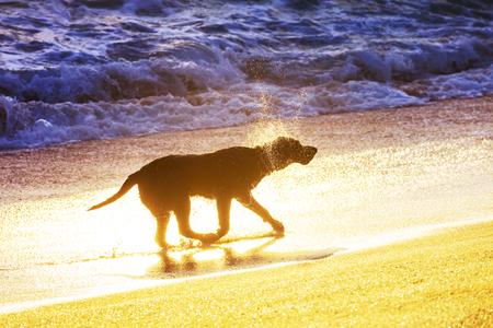 dog on beach in Hawaii island