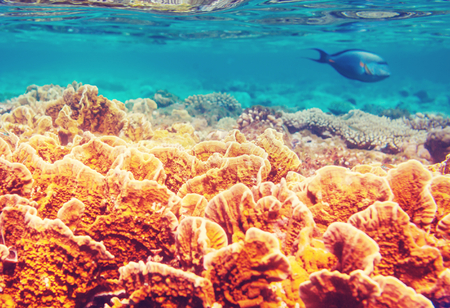 Living Coral reef in Red Sea, Egypt. Standard-Bild