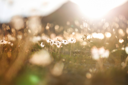 Sunny day on the flowers meadow. Beautiful natural background. Stock Photo