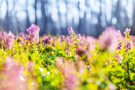 Beautiful garden spring flowers Stockfoto