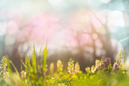 Hermoso jardín de flores de primavera