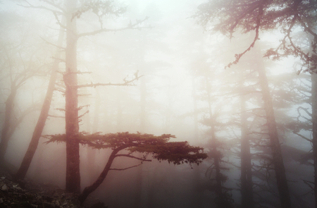 Magic misty forest Imagens - 121495498