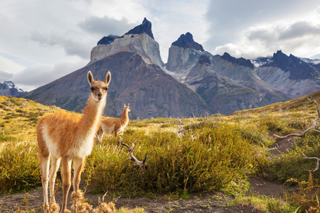 Beautiful mountain landscapes in Torres Del Paine National Park, Chile. World famous hiking region. Фото со стока