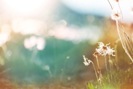 Sunny day on the flowers meadow. Stock Photo
