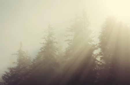 Sunny beams in forest at sunset