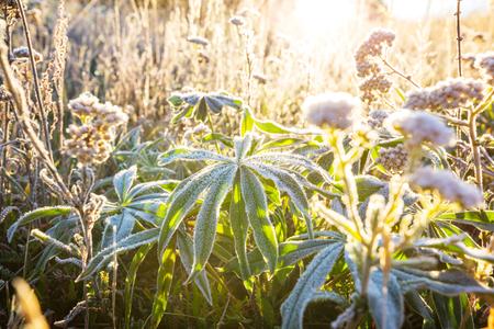 Sunny day on the flowers meadow. Foto de archivo