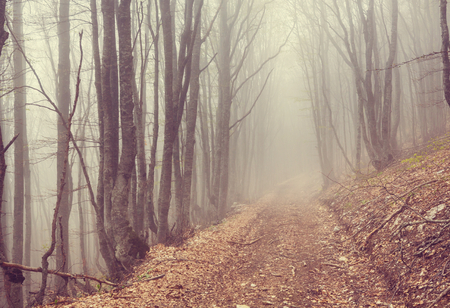 Magic misty forest. Beautiful natural landscapes.