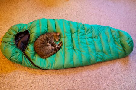 Sleeping cat on hiking sleeping bag