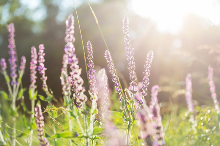 Sunny day on the flowers meadow. Beautiful natural background. Foto de archivo