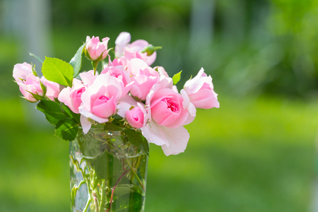 Pink Rose, beautiful nature background