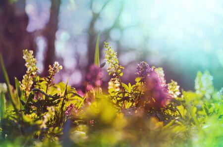 Beautiful garden spring flowers. Natural background.