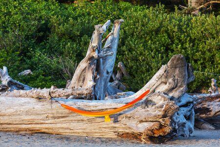 Hammock on the dry tree in Pacific coast Banco de Imagens