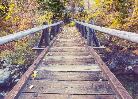 Wooden boardwalk through autumn forest