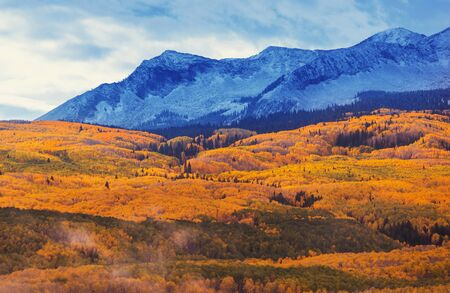 Colorful yellow autumn in Colorado, United States. Fall season. Standard-Bild
