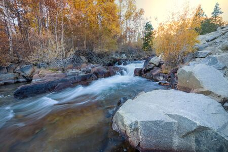 The forest creek in autumn 스톡 콘텐츠