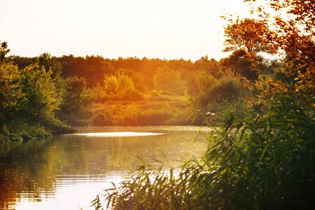 River bank in sunny summer day 스톡 콘텐츠