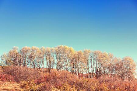 Autumn scene in yellow tones. Fall background.