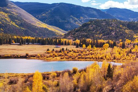 Colorful yellow autumn in Colorado, United States. Fall season.