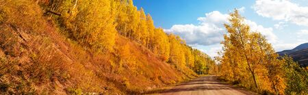 Colorful Autumn scene on countryside road in the forest