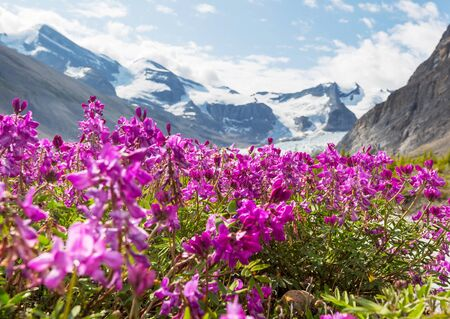 Mountain meadow in sunny day. Natural summer landscape. Mountains in Alaska.