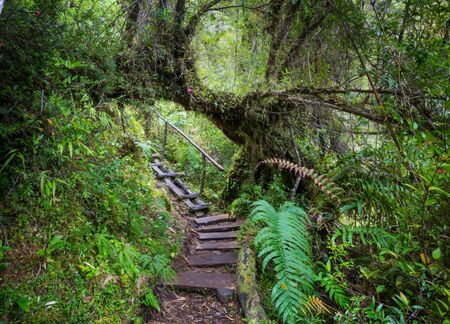 Giant tree in rain forest . Beautiful landscapes in Pumalin Park, Carretera Austral, Chile. Stok Fotoğraf