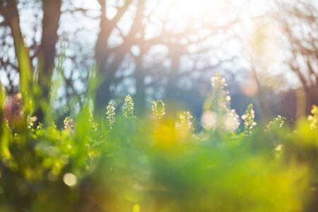 Hermosos paisajes boscosos. Flores de primavera en el bosque.