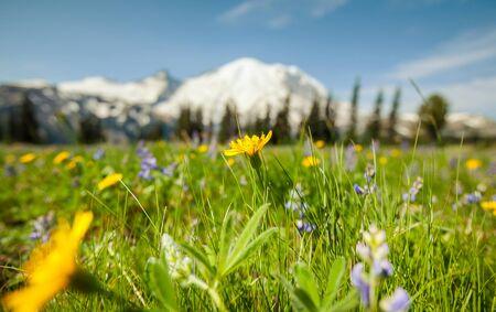 Prado de montaña en temporada de verano