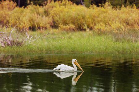Big Pelican on the sea shore Banco de Imagens - 138250615
