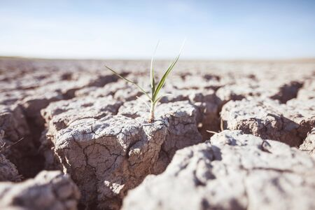 Growing plant on drought land 스톡 콘텐츠