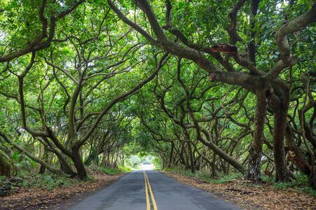 Dirt road in remote jungle in Big Island, Hawaii Stockfoto