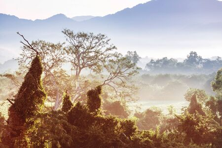Tropical jungle at sunrise in Mexico Stockfoto