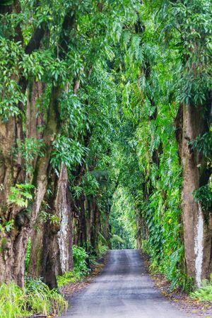 Dirt road in remote jungle in Big Island, Hawaii