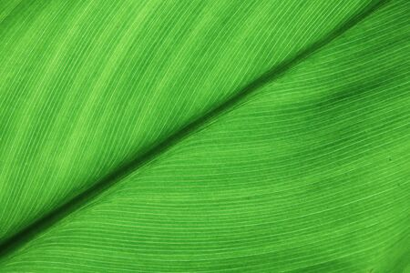 Green leaves close up in garden Banco de Imagens