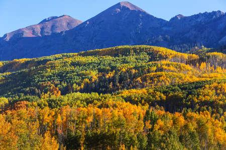 Colorful yellow autumn in Colorado, United States. Fall season. Archivio Fotografico